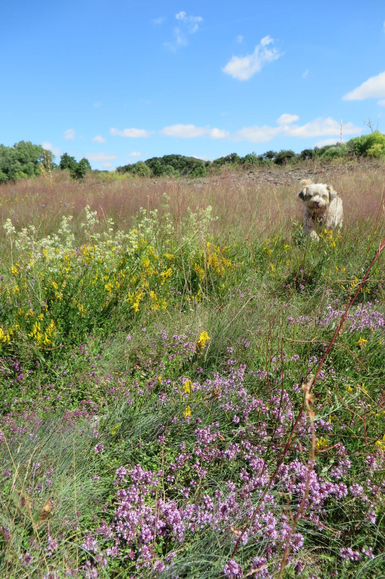 Im Naturschutzgebiet Mittleres Innerstetal