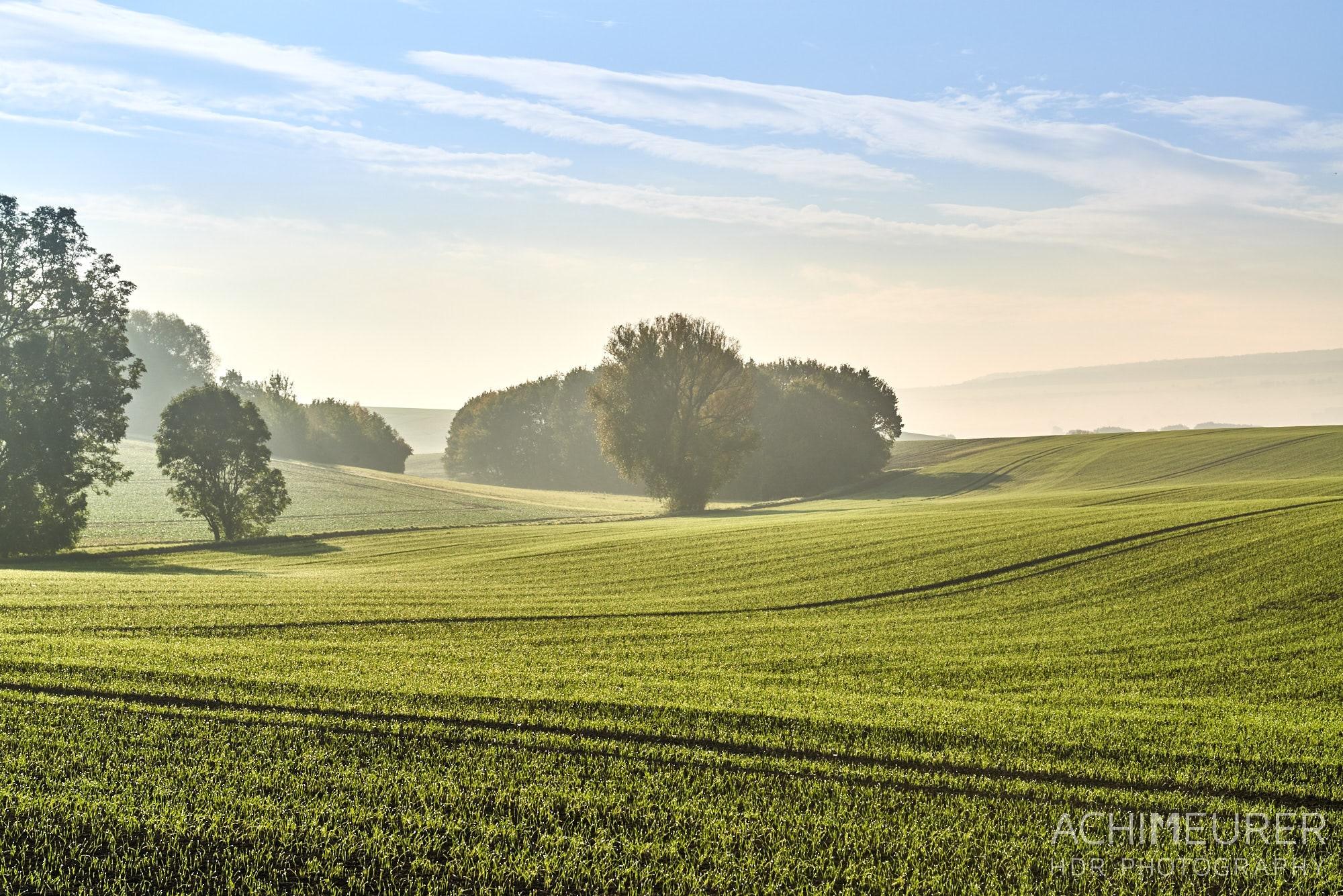 Landschaft im Morgennebel - Nördliches Harzvorland - #nHavo