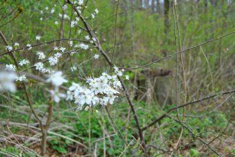 Frühlingsspaziergang im Steinbruch Ostlutter