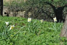 Frühlingserwachen im Schlossgarten!