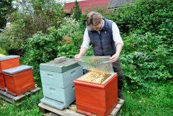 Gänsejagd und Bienenzucht im Nördlichen Harzvorland - Regionale Produkte aus Barnstorf