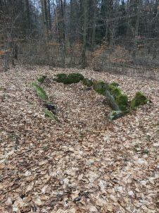 Zum Steinkistengrab und auf den höchsten Gipfel des Elms