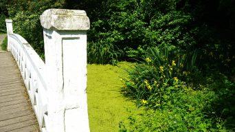 Märchenhaft: ein Ausflug in den Schlosspark Destedt