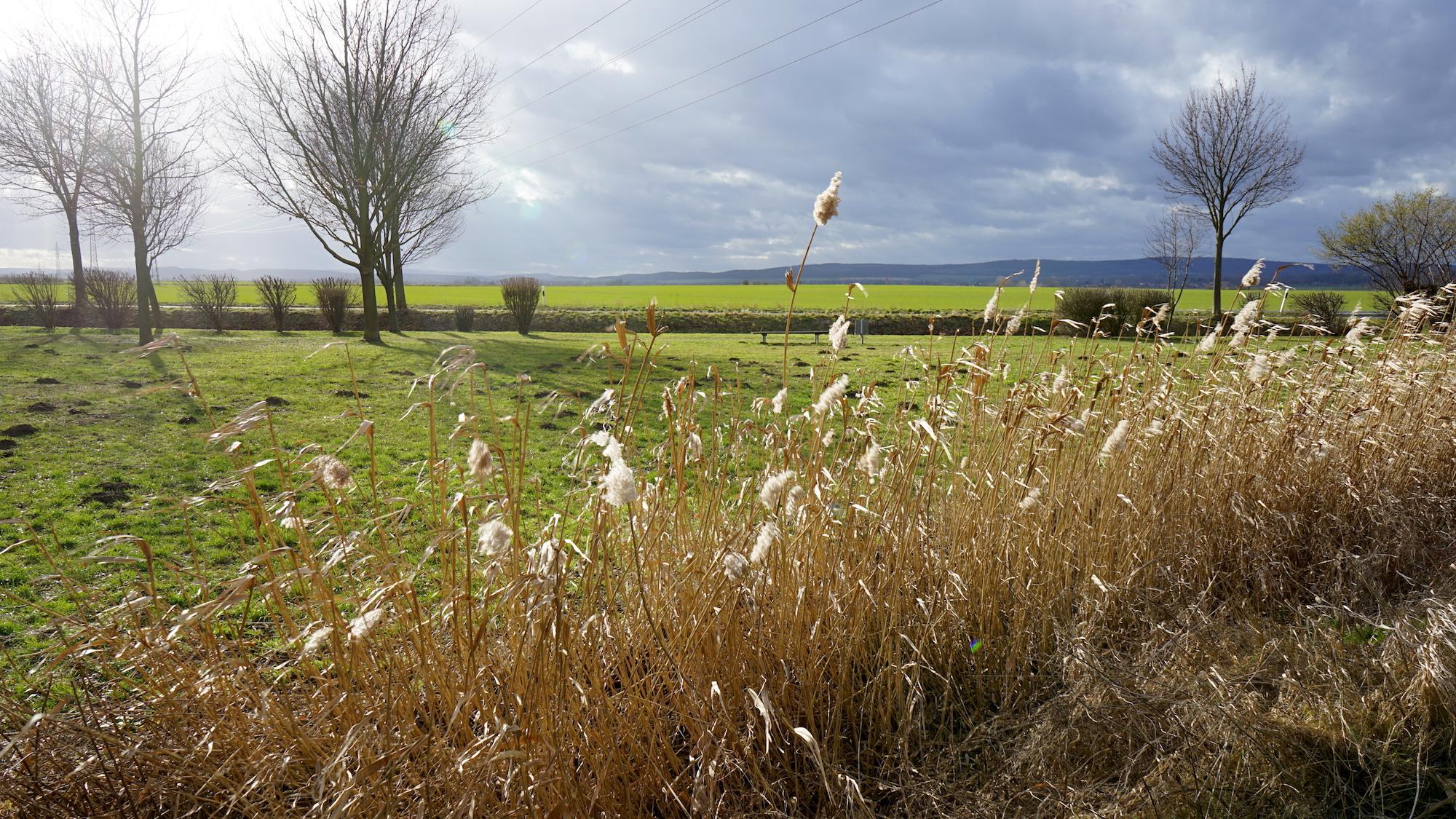 Es grünt so grün: Frühjahr im Schulwald Cramme / Beate Ziehres