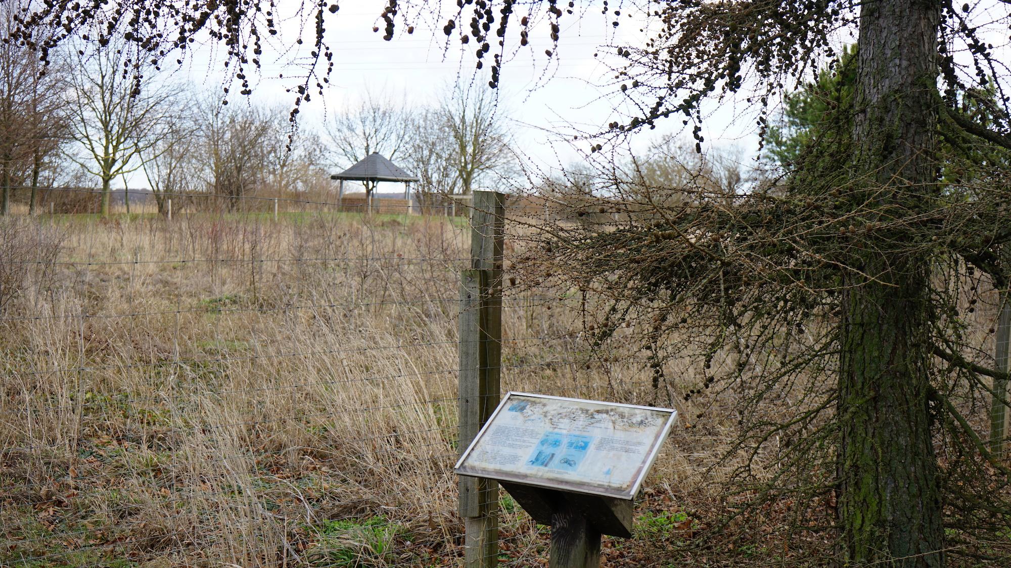 Blick von der Lärche über den jungen Schulwald zum Pavillon / Beate Ziehres