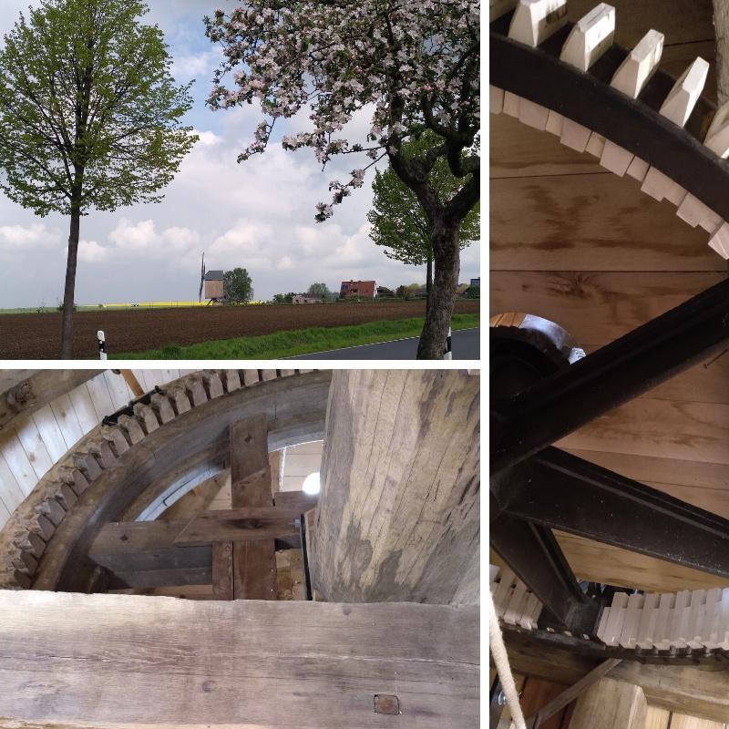 großes Mühlenrad saniert in gutem Zustand, und Bild mit Bockwindmühle in der Ferne, vorne Apfelblüte
