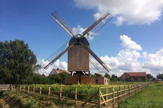 Nördliches Harzvorland, Windmühle Dettum: Die restaurierte Mühle erstrahlt an ihrem neuen Standort / Uwe Schäfer