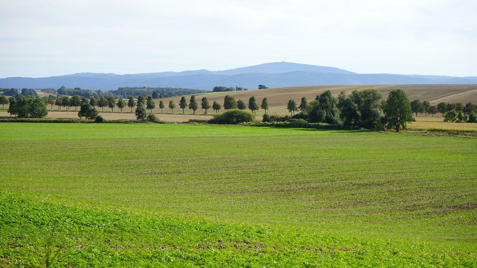 Nördliches Harzvorland: Blick zum Brocken auf dem Weg zur Stempelstation 25 / Beate Ziehres