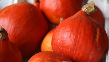 Herbstliche Genüsse aus dem Nördlichen Harzvorland