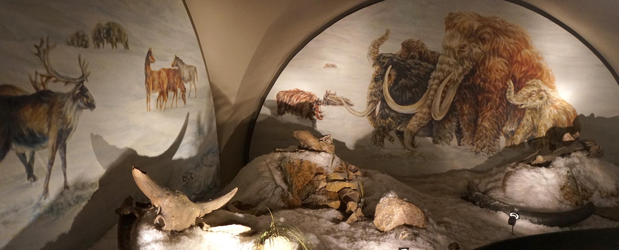 Nördliches Harzvorland, Städtisches Museum Schloss Salder Salzgitter, eiszeitliche Szene. Foto: Beate Ziehres