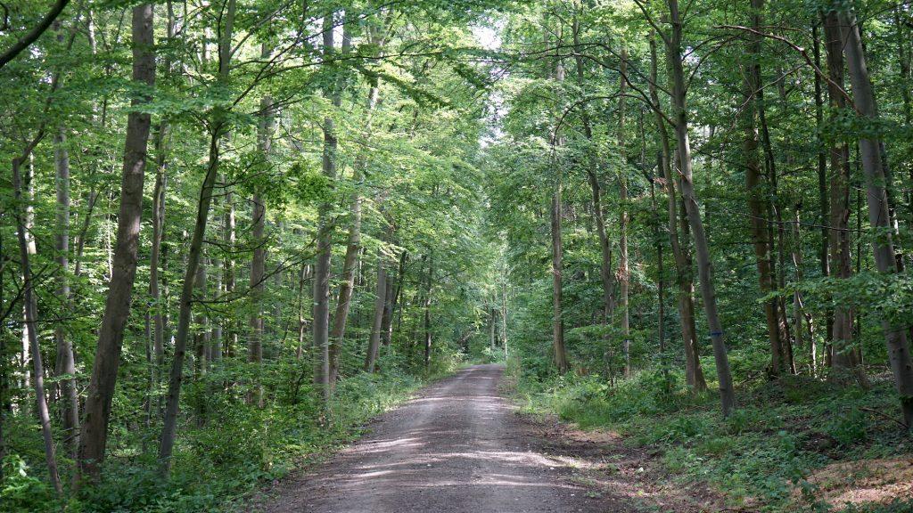 Nördliches Harzvorland, Liebenburg, Wanderweg . Foto: Beate Ziehres