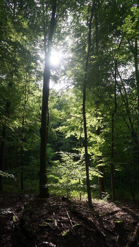 Liebenburg: Wanderung mit Hüttenzauber im Nördlichen Harzvorland